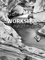 FOTO-WORKSHOP