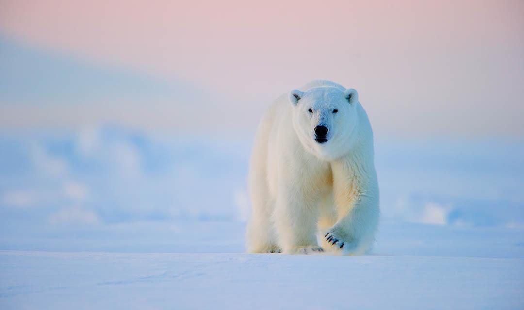 Abenteuer Arktis